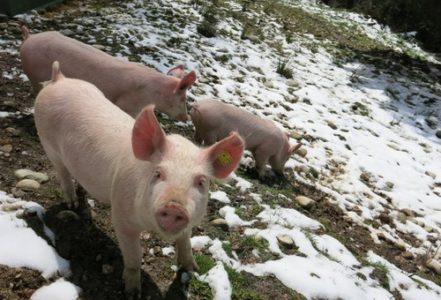 Small is beautiful. Pour une suisse sans fabriques d'animaux ni usines agricoles