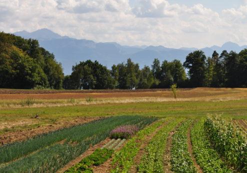 L'agrobiodiversité doit être renforcée