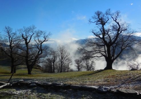 Agriculture au Tessin: charme et exigences du Sud